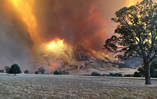 Bushfire blazes on a hill