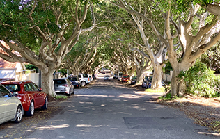 Tree-lined street in Bronte NSW